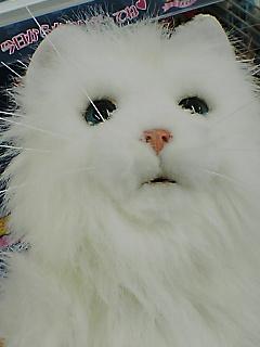 夢猫とイーブイ^^