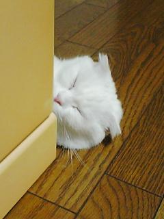 リボンちゃんは♂の覚醒者!!