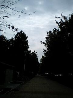 今日は少し曇り空