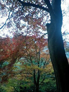 嵐山(紅葉)