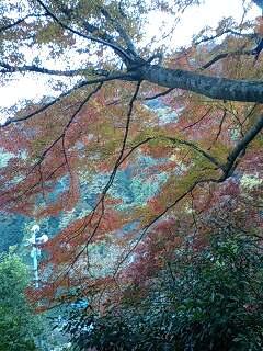 嵐山(紅葉)体験♪