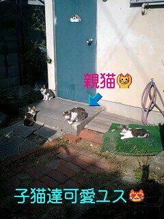 近所の猫ちゃん達とジジ