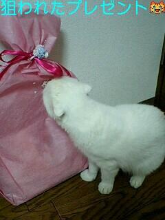 貰ったプレゼント!!