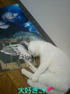 ポスターと羽根♪