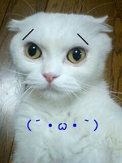 愛猫リボンちゃん