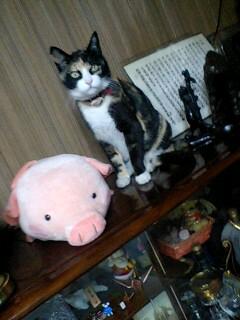 実家の猫ジジ
