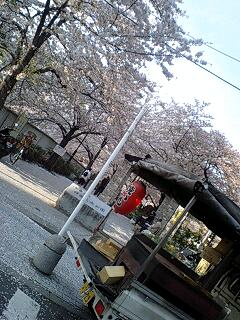 桜舞うお弁当