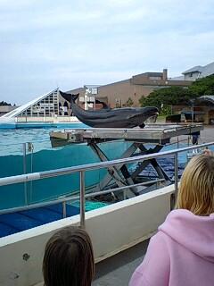 沖縄のイルカのショー